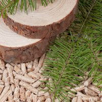Maine Takes Step Forward with Biomass