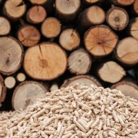 The Latest News in Biomass