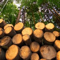 Industry Leaders Talk to Congress About Forest Biomass