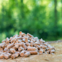 The Latest in Biomass News